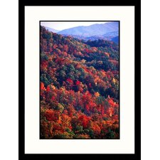 <strong>Great American Picture</strong> Forest in Autumn, Tennessee Framed Photograph - Bob Jacobson