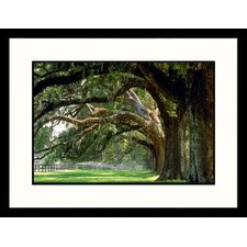 Landscapes 'Oak Trees Boone Hall Plantation, South Carolina' by Mike McGovern Framed Photographic Print