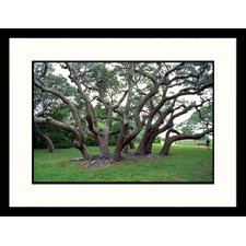Landscapes 'Big Tree of Lamar Goose Island, Texas' by Ray Hendley Framed Photographic Print