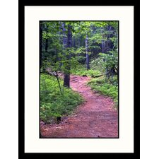 <strong>Great American Picture</strong> Path Great Smokey Mountain National Park, TN Framed Photograph - David Davis