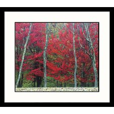 Landscapes Autumn West Virginia Framed Photographic Print