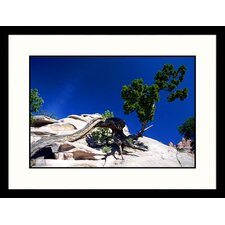 <strong>Great American Picture</strong> Window Rock Arizona Framed Photograph - James Denk