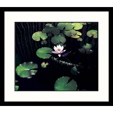 Landscapes 'Water Lily l' by Mark Gibson Framed Photographic Print