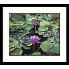 <strong>Great American Picture</strong> Water Lily ll Framed Photograph