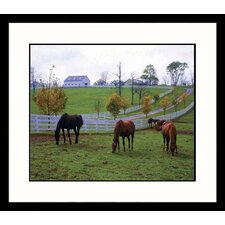 <strong>Great American Picture</strong> Kentucky Horses Grazing Framed Photograph