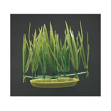 Marina Aquascaper Micro Sagittaria Plant Decoration