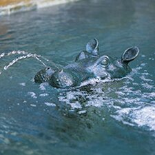 Hippo Head Fountain
