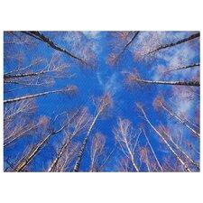 Treetops Photographic Print on Canvas
