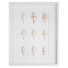 Spindle Shells Shadow Box Graphic Art