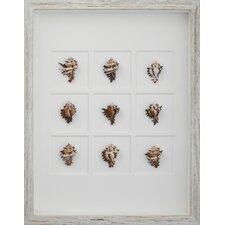 Endive Murex Shells Wall Art Shadow Box in Brown