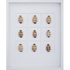Mole Cowrie Shells Wall Art Shadow Box in Brown
