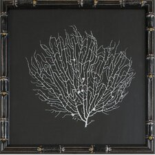 Sea Fan Framed Graphic Art