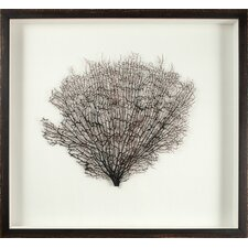 Large Natural Sea Fan Framed Graphic Art