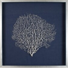 Large Sea Fan Framed Graphic Art