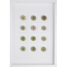Sea Urchins Shadow Box Graphic Art