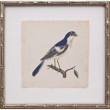 Mini Levallion Bird I Framed Graphic Art
