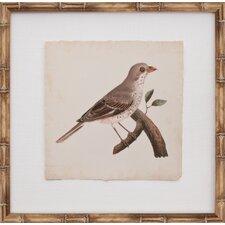 Mini De Langlois Bird II Framed Graphic Art