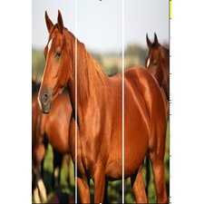 "72"" x 48"" Horse Screen 3 Panel Room Divider"