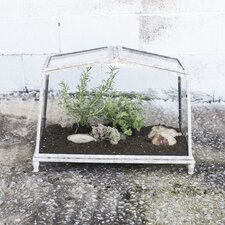 Secret Garden Novelty Terrarium