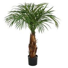 Phoenix Palm Tree in Planter