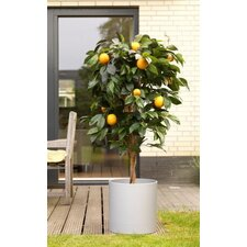 "60"" Artificial Orange Tree"