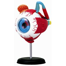 4D-Vision Human Eyeball Anatomy Model