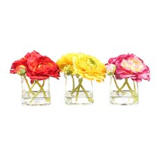 Floral Ranunculus in Glass Cube Assortment (Set of 3)