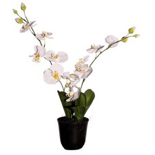 "Floral 24"" Artificial Potted Cymbidium Orchids in White & Yellow"