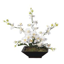 Floral Artificial Potted Orchid Square in White and Yellow
