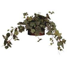 Floral Grape Ivy Desk Top Plant in Pot