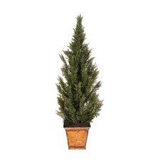 Deluxe Cedar Tree in Pot