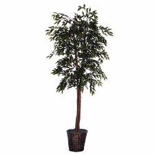Cedar with Cones Executive Smilax Tree in Basket