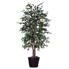 Blue Ridge Fir Executive Mystic Ficus Tree in Metal Pot