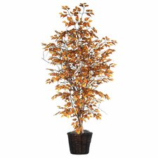 Blue Ridge Fir Executive Golden Birch Tree in Basket