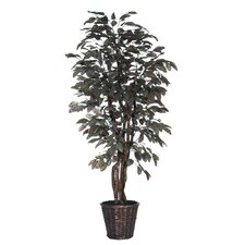 Blue Ridge Fir Executive Frosted Apple Tree in Basket
