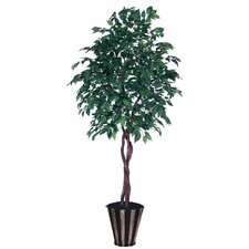 Blue Pencil American Elm Heartland Tree in Pot