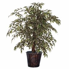 Blue Variegated Smilax Tree in Basket