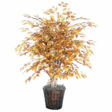 Blue Golden Birch Tree in Basket
