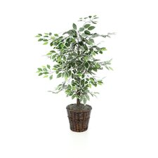 "Deluxe 72"" Artificial Potted Natural Ficus Tree in Green"