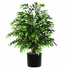 Extra Full Smilax Tree in Pot