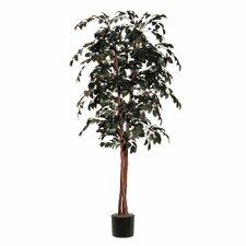 Sakaki Deluxe Tree in Pot