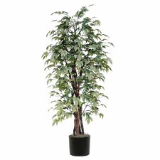 Ridge Fir Frosted Maple Executive Tree in Pot