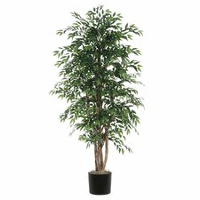 Ridge Fir Smilax Executive Style Tree in Pot