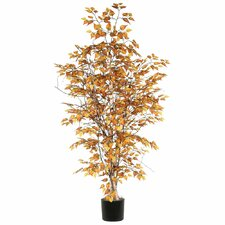 Ridge Fir Birch Executive Tree in Pot
