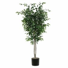 Ficus Deluxe Tree in Pot