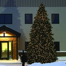 Grand Teton 20' Green Commercial Artificial Christmas Tree with 1395 LED Clear C7 Lights