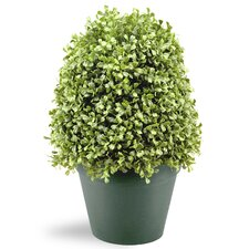 <strong>National Tree Co.</strong> Boxwood Tree in Pot