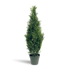 Arborvitae Floor Plant in Pot