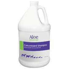 Aloe Concentrated Shampoo
