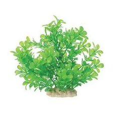 Natural Elements Moneywort Aquarium Ornament in Green